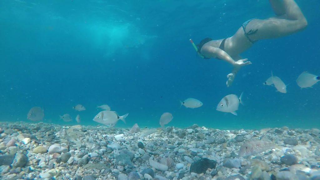 Primo esperimento: lasciare la GoPro sul fondo, smuovere la sabbia e lasciare che i pesci girino attorno!